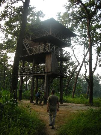 Sapana Village Lodge: Jungle Walk...we saw RHINOS!