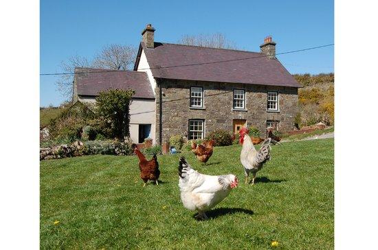 Nantgwynfaen Organic Farm
