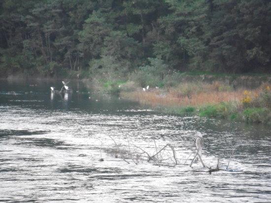 Azumino, Japan: 白鳥湖