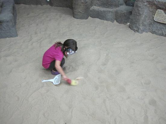Jasmine Moran Children's Museum: The dinosaur dig.