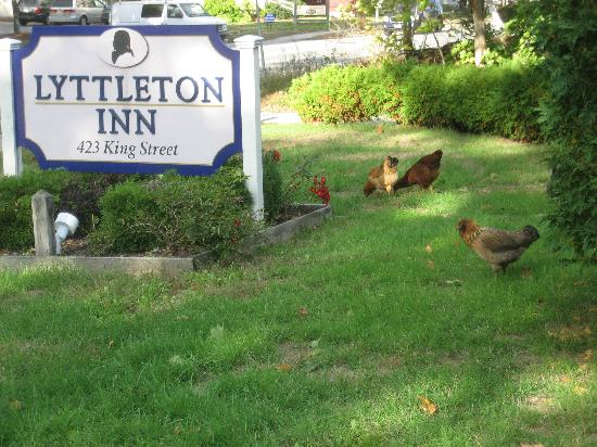 Lyttleton Inn: Littleton Inn sign & Mary's chickens