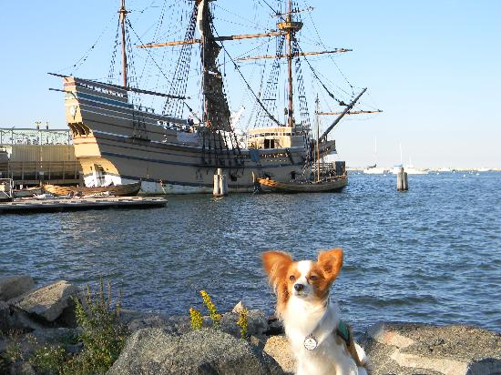 Jenney Museum: Jazzy is glad to be off the Mayflower and find grass.