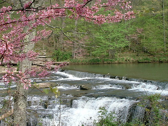 Indiana: Spring at Cataract Fall with Dogwoods