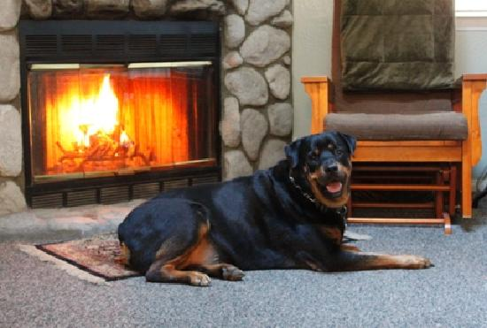 Pine Knot Guest Ranch: My Rottie in front of the fireplace