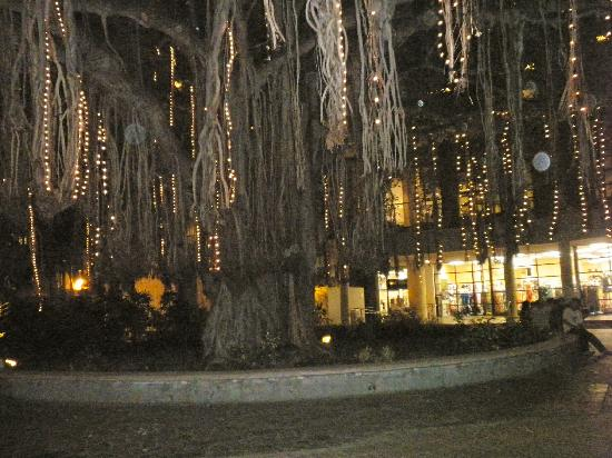 "Hale Koa Hotel : ""Gus"" the Banyan Tree Dressed with Lights"