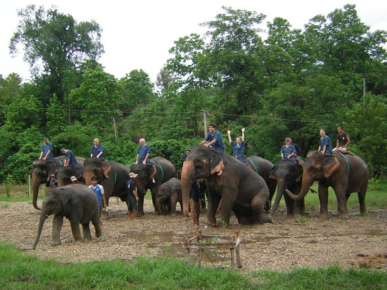 Magical Elephant Training: Happy Guest and elephants