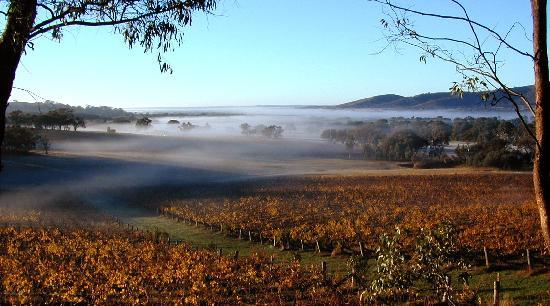 Moonambel Australia  city photos gallery : Moonambel, Australia: Beautiful Warrenmang vineyards early Autumn morn