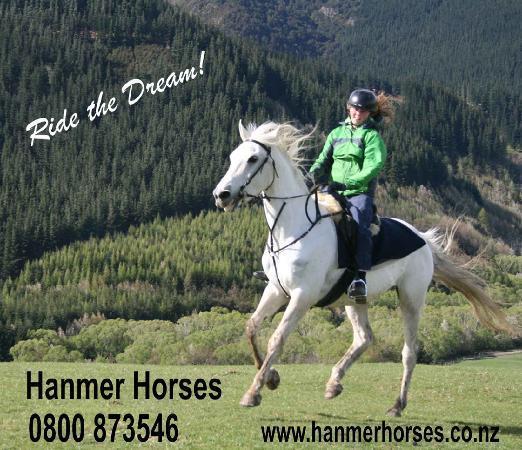 Hanmer Horses: Quality horses & rides