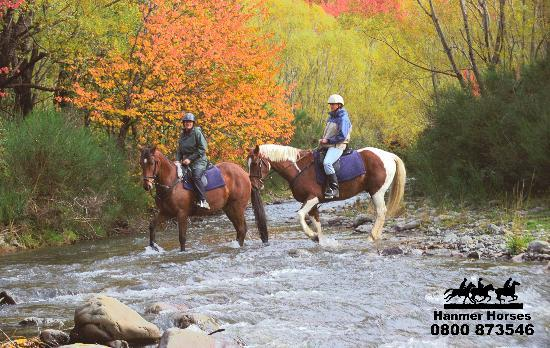 Hanmer Horses: Mountain river crossing