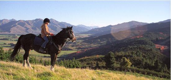 Hanmer Horses: Amazing views
