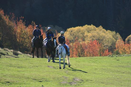 Hanmer Horses: All abilities catered for