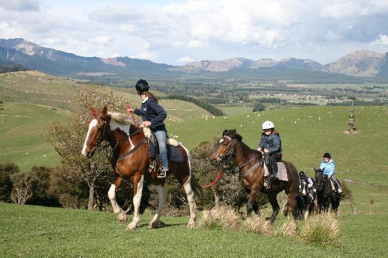 Hanmer Horses: Children can be led