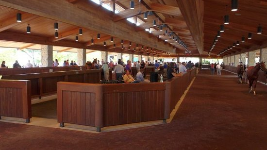 Midway, KY: UnBridled Horse Tours - Yearling Sales at Keenland