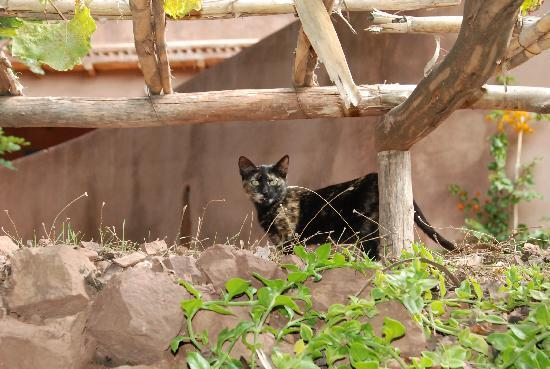 Le jardin de Timalizene: le chat