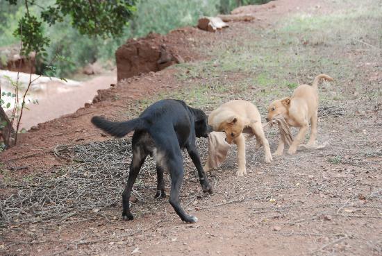 Le jardin de Timalizene: les chiens