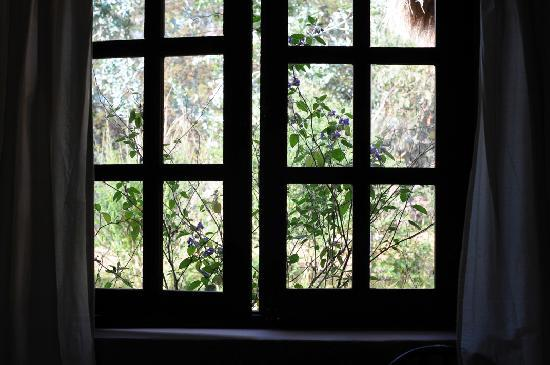 The Green House Peru: My window, there's a stream just right outside