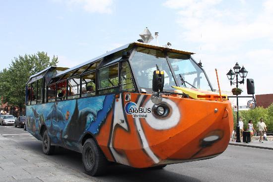 มอนทรีออล, แคนาดา: Bus anfibio