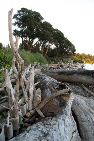 Vashon, WA: small driftwood-strewn beach near Inn
