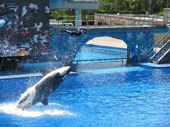 Orlando, Floryda: Sea World Show