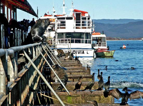 Fischmarkt am Biobio in Valdivia
