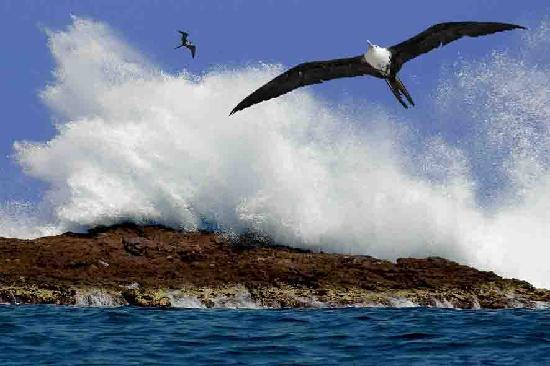 Rancho Banderas All Suite Resort by Marival Group: Frigate bird out on the Islas Marietas