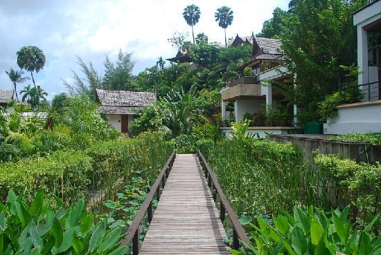 Ayara Hilltops Resort and Spa: Little lotus pond