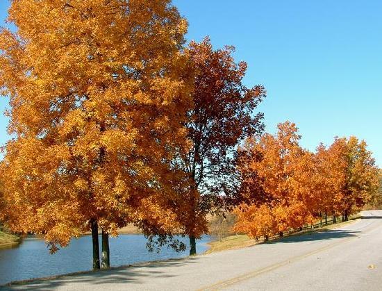 Guntersville, AL: Vacation