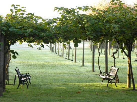 Kiwi Cove Lodge: Kiwi garden