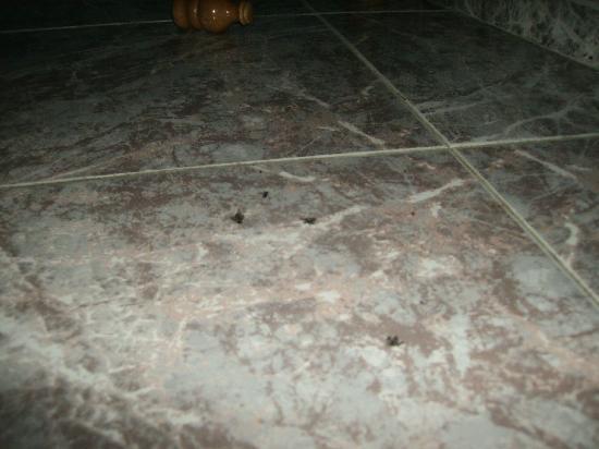 Hostal Restaurante El Portalico: Moscas debajo de la cama