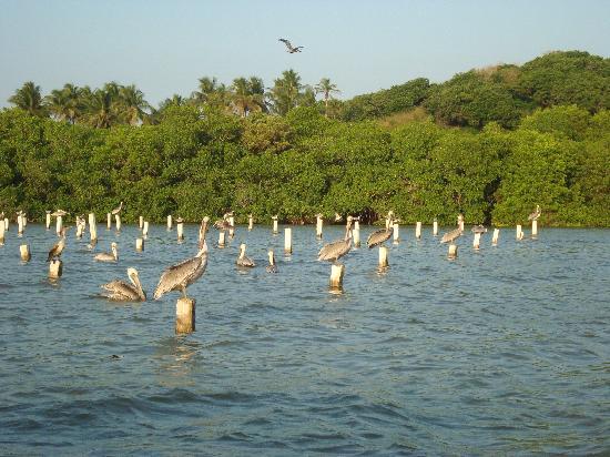 Veracruz, Messico: aves en la laguna tamiahua
