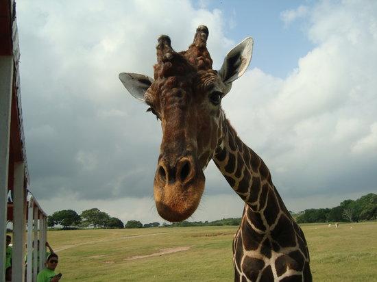 Veracruz, Messico: zoologico el solito
