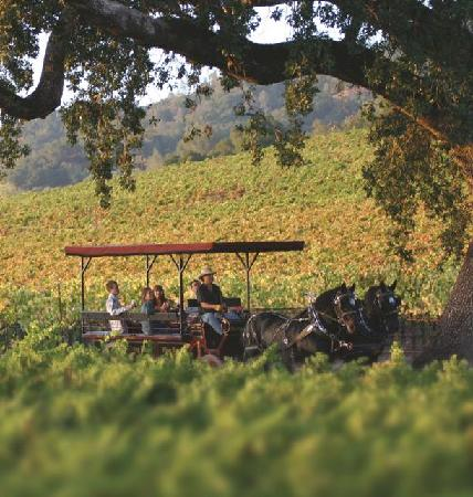 The Wine Carriage: Relax and enjoy riding through the vineyards on this wine tasting adventure