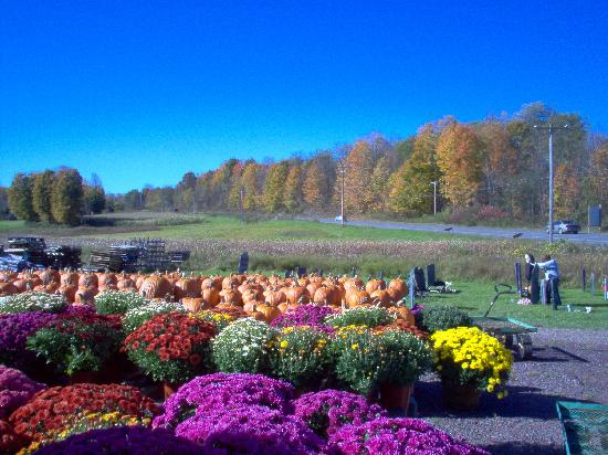 The Vermont Inn Restaurant: Fall Color
