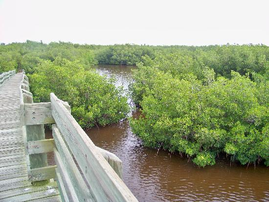 Vero Beach, FL: More nature on boardwalk thru the mangroves