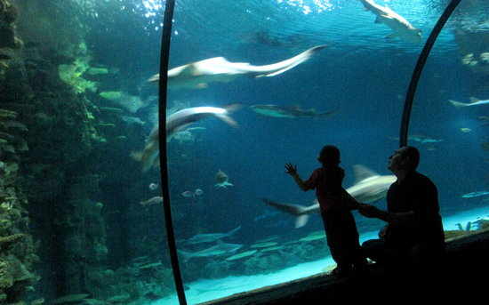 Shark reef aquarium picture of shark reef las vegas for Tropical fish las vegas