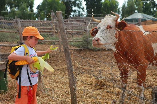Agriturismo Podere Giulio: e gli animali...