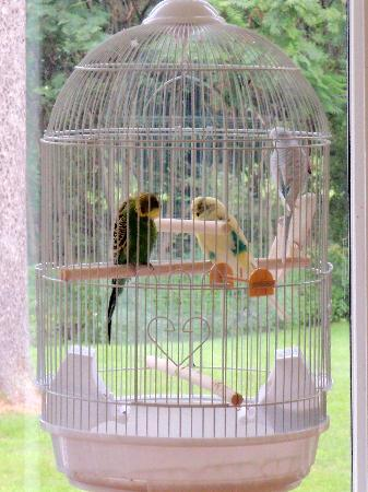 Marble Mansion Inn: Feathered Friends at Breakfast