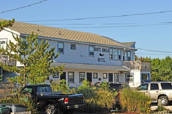 Barnegat Light, NJ: White Whale Motel, Bernagat Light