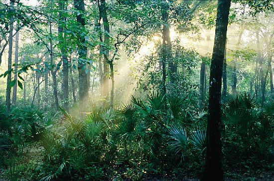 Florida: Ocala National Forest