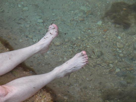 Bimmah Sinkhole: Nibbley fish