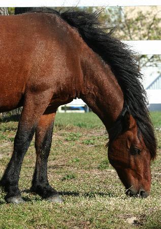 Wild Horse Adventure Tours: Wild Stallion