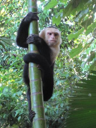 La Posada Private Jungle Bungalows張圖片