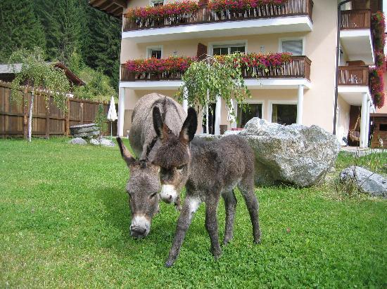 Alphotel Tyrol: Unser jüngster Streichelzoo-Neuzugang: Baby-Esel Paulchen