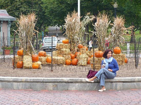 Boston Common: Halloween arrival at the Common !