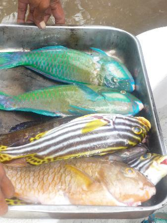 Nukubati Private Island: Catch of the day