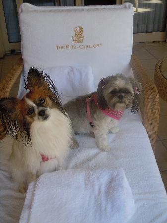 The Residences at The Ritz-Carlton, Grand Cayman: Pampered Pets!