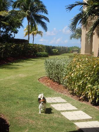 The Residences at The Ritz-Carlton, Grand Cayman: Lots of Grass and Beach for them!