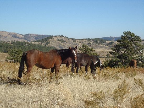 The Black Hills Wild Horse Sanctuary : Beautiful horses