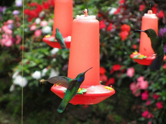Peace Lodge: Hummingbird Exhibit