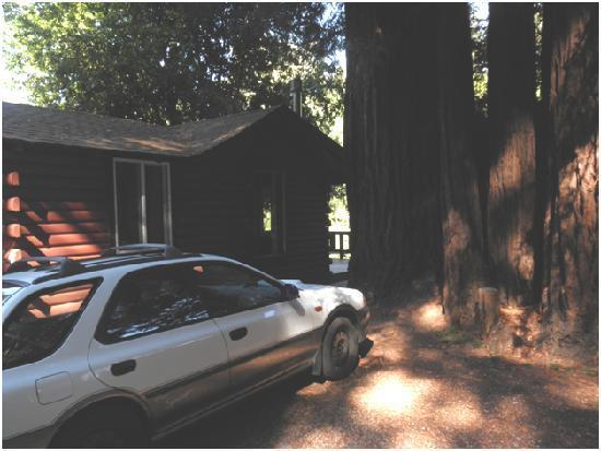 Fern River Resort Motel: Nestled in the Big Trees
